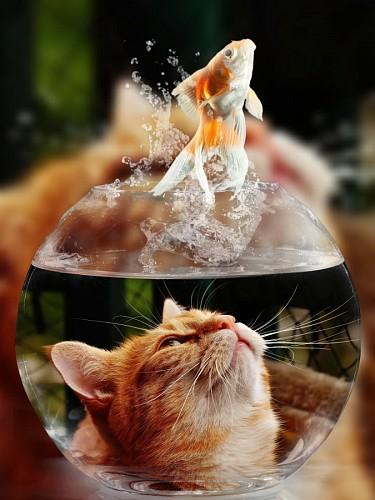 Travieso gatito observando al pez saltar de su pecera