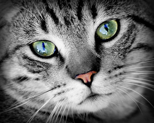 Profunda mirada verde de felino para fondo de pantalla