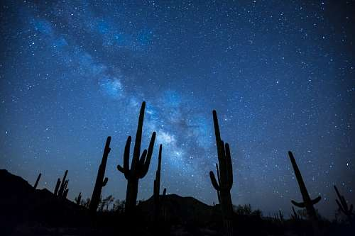 Cactus en la noche