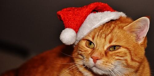 Perfil de gato con disfraz de navidad