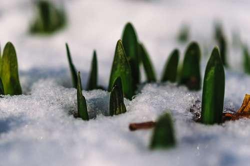 Planta creciendo en el hielo