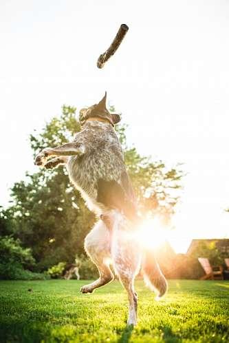 imágenes gratis Perro Saltando