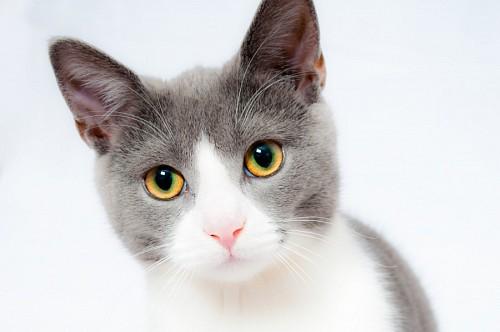 Primer plano de gatito dulce en fondo blanco