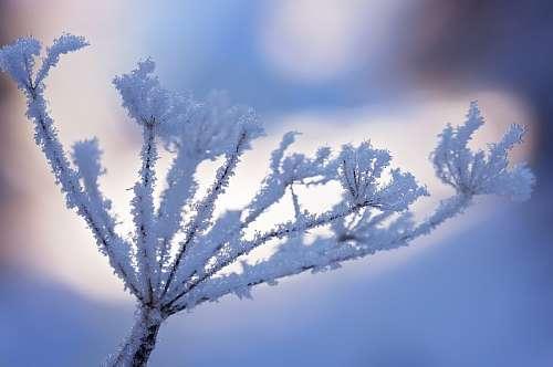 imágenes gratis Rama congelada
