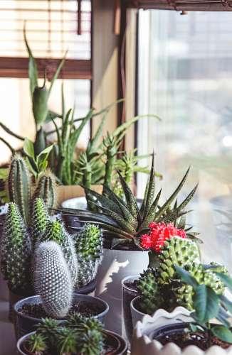 imágenes gratis Jardin de cactus