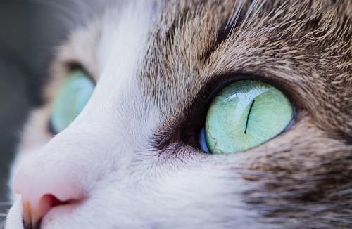 Amorosa mirada felina de color verde