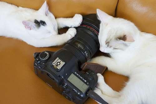 gatitos con camara de foto