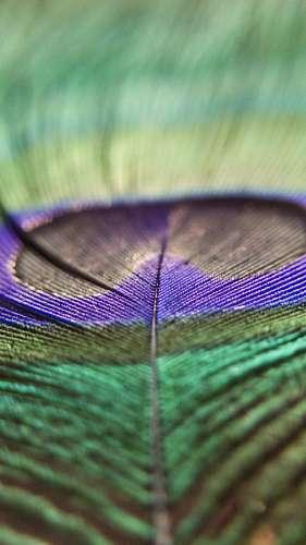 Pluma Colorida