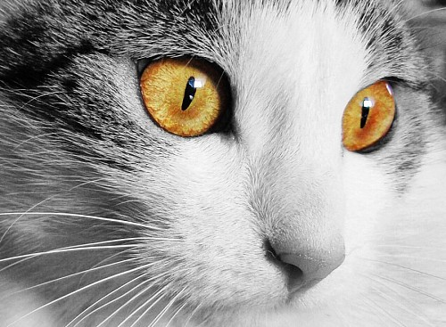 Hermosa mirada ojos amarillos
