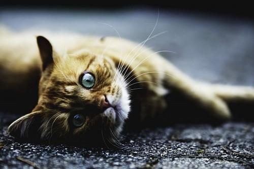Gato mirando torcido sobre el asfalto