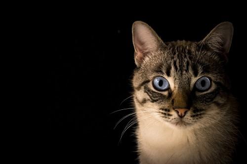 Primer plano de Gato para fondo de pantalla