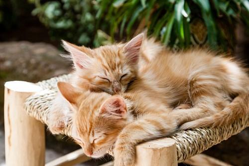 Pequeños gatitos dándose calor