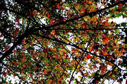 imágenes gratis fondo, background, naturaleza, arbol, hoja, hojas,