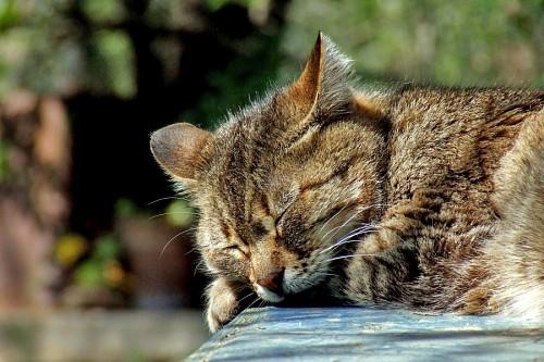 imágenes gratis Gato durmiendo