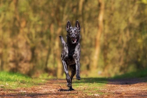 imágenes gratis Adorable Perro negro corriendo en el campo