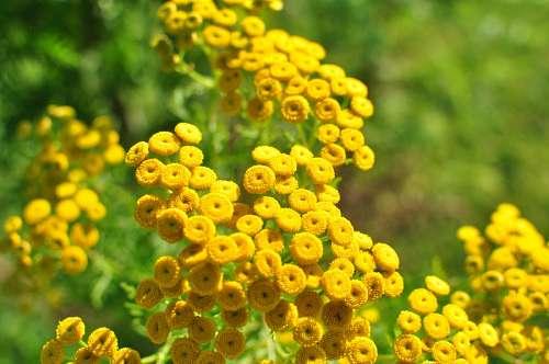 flor, flores, amarillo, naturaleza, fondo, backgro