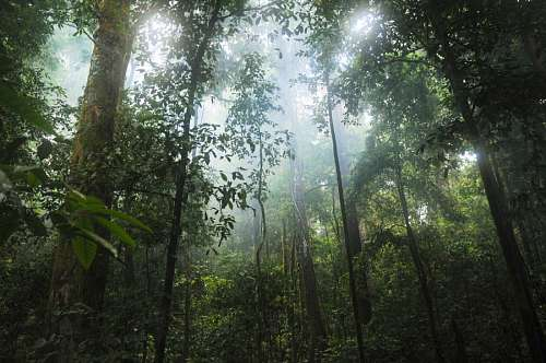 imágenes gratis Selva