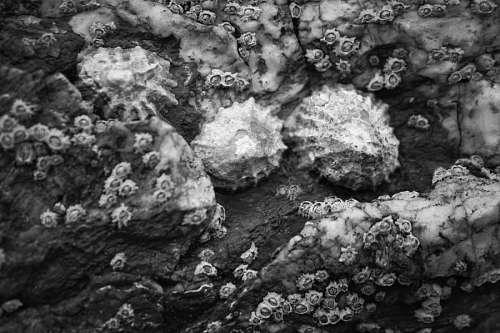 Caracoles en las rocas