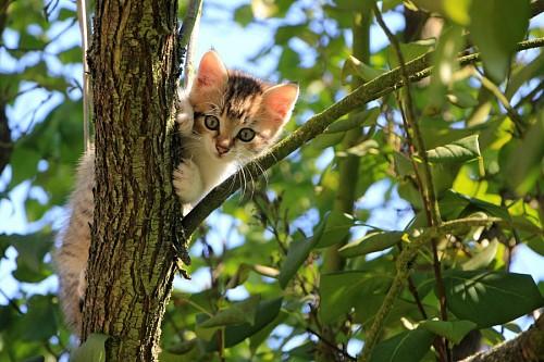 Gatito travieso trepando arbol