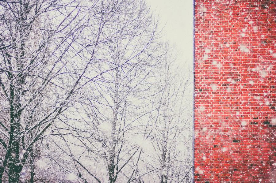 pared, ladrillos, invierno, rojo, ladrillo, arquitectura, muro, arbol, nieve, nevado, nadie,