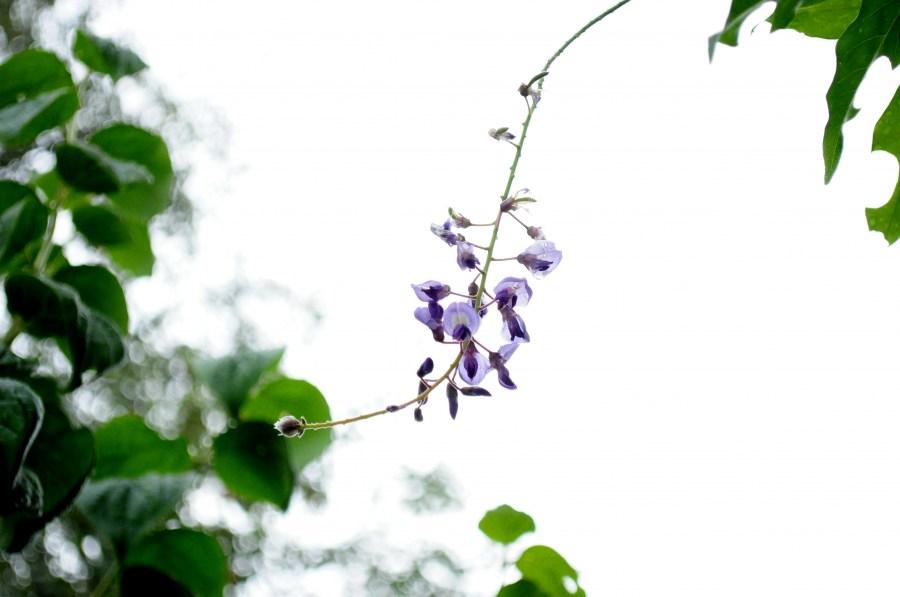 Imagen de hoja, flor, flores, naturaleza, lila, vista de fre - Foto ...