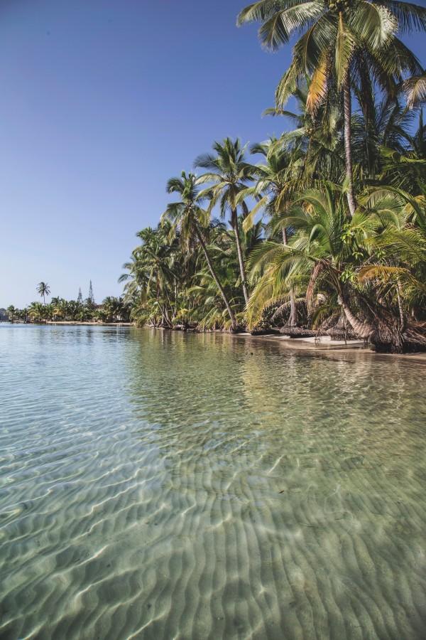 Panama, Playa, tropical, nadie, palmera, transparente, caribe, caribeño, idilico, vacaciones,