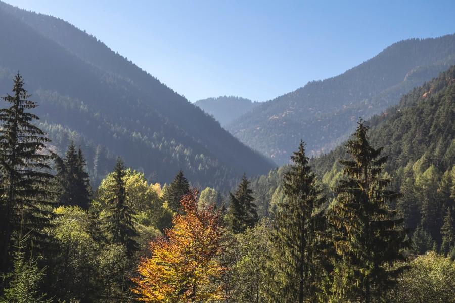 bosque, pinos, paisaje, arboles, naturaleza, montañas, aire libre, exterior, dia, verano,