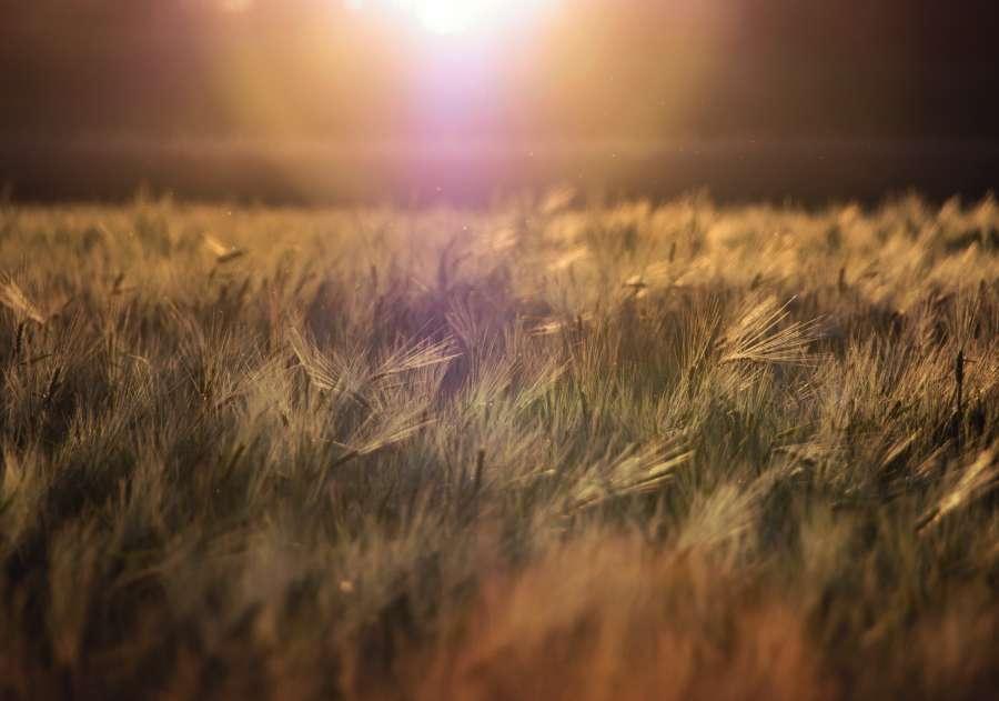 pasto, cesped, atardecer, fondo, background, nadie, luz, resplandor, destello, sol, naturaleza,