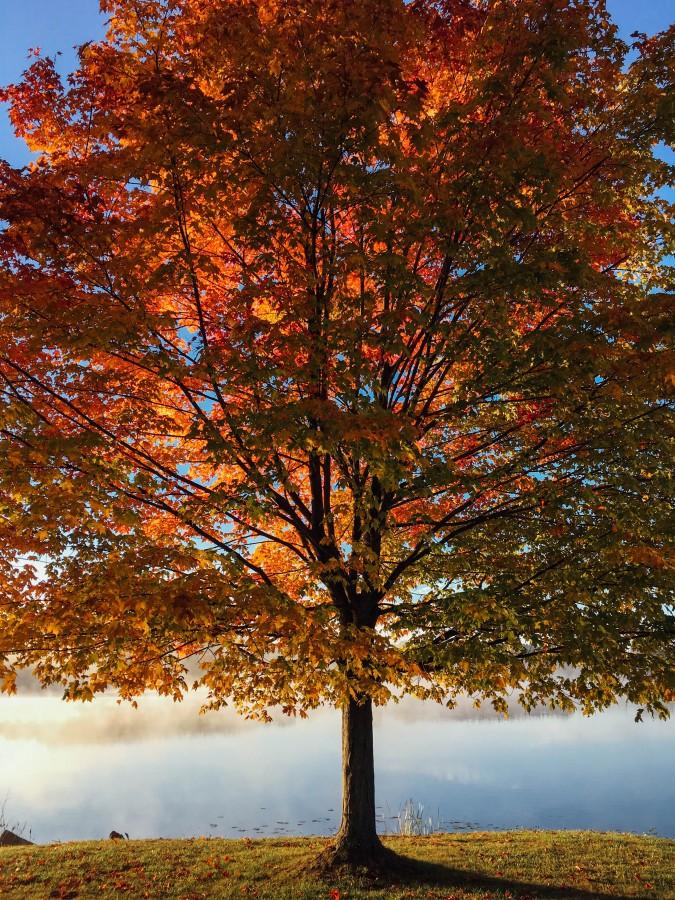 otoño, arbol, naturaleza, estaciones, vista de frente, rojizo, lago, tranquilidad, tranquilo, costa,