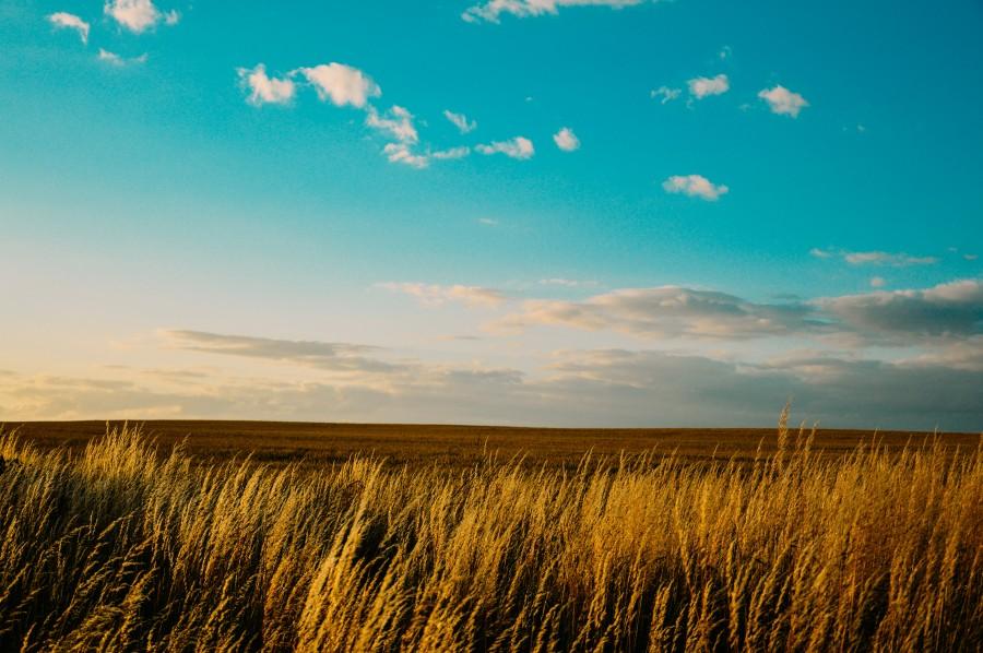 paisaje, campo, azul, cielo, nubes, sol, puesta del sol, cultivos, plantas, naturaleza,