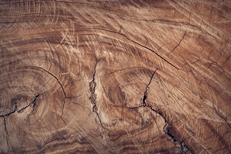 marrón, primer plano, fondos de pantalla hd, superficie, textura, madera, primer plano, natural, naturaleza, tronco, árbol, fondos de pantalla gratis Hd