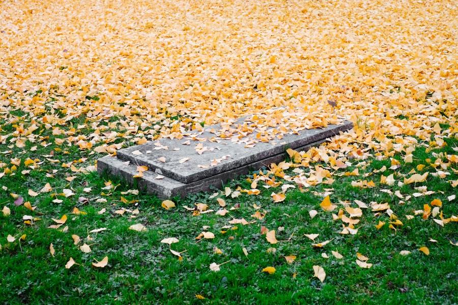 cementerio, tumba, hojas, otoño, primer plano, nadie, muerte,
