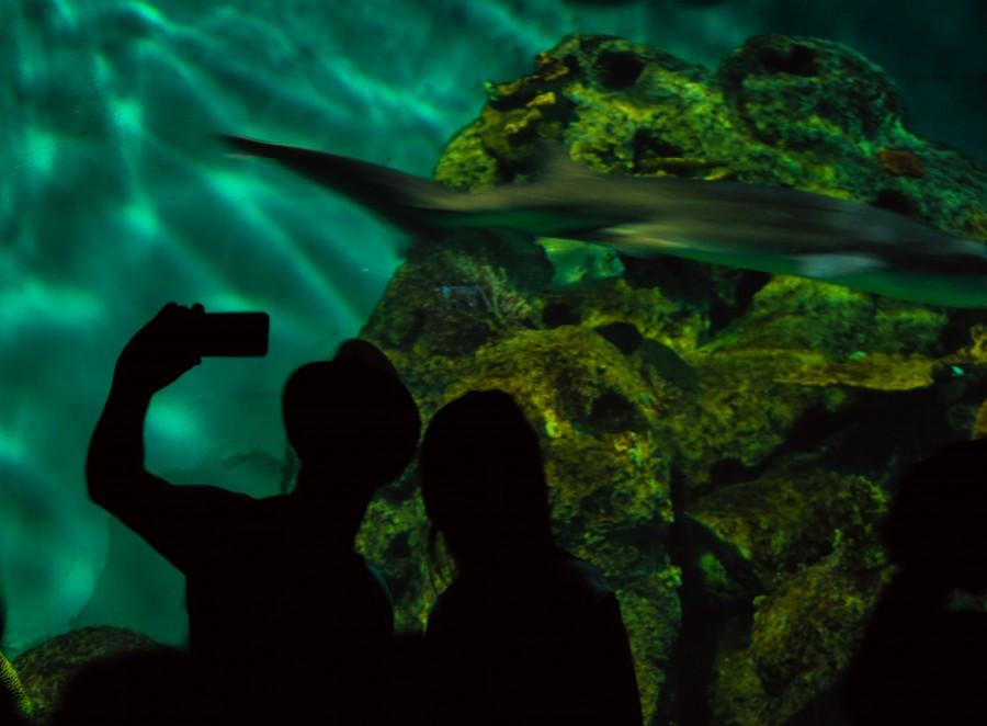 selfie, celular, pareja, jovenes, acuario, paseo, peces, tiburones, fondo del mar, vida marina, pecera, paseo, hombre, mujer, sombrero, sombras, fotografia