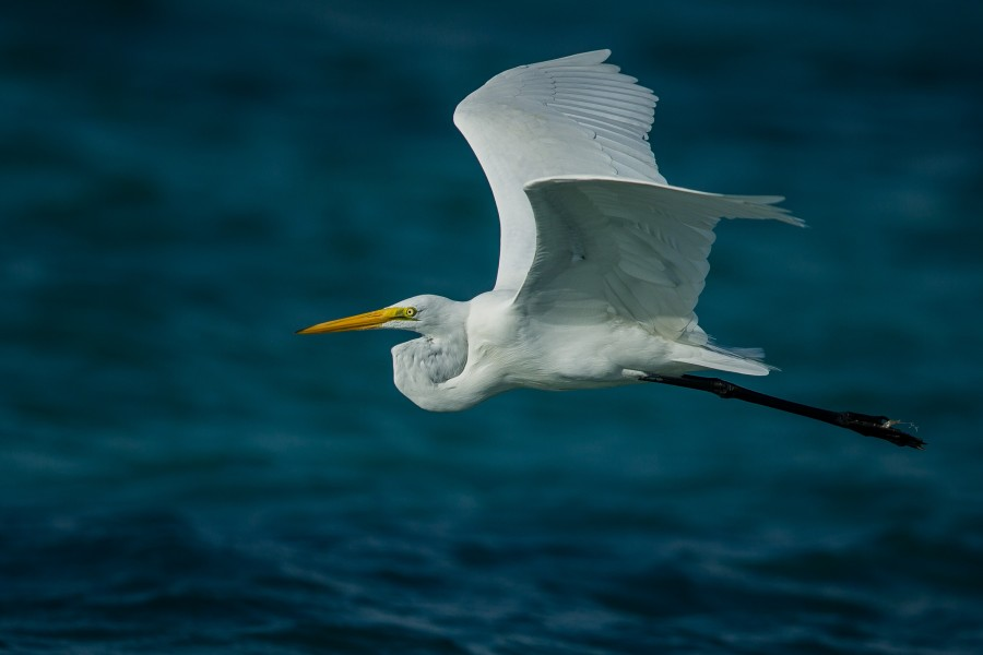 cigueña, animal, ave, volando, uno, naturaleza, salvaje,