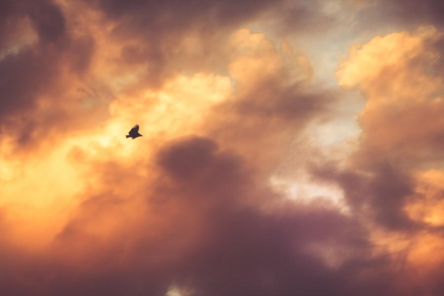atardecer, cielo, paisaje, nube, nubes, ave, volando, volar, naturaleza,