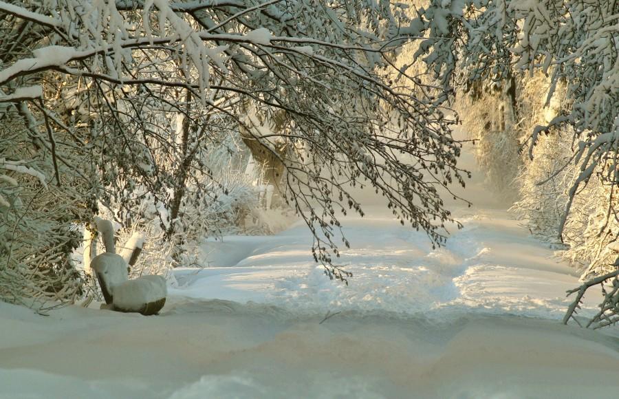 nieve, frío, invierno, árbol, hoja seca, helar, frescura, baja temperatura, frialdad, fresco, gélido, congelado