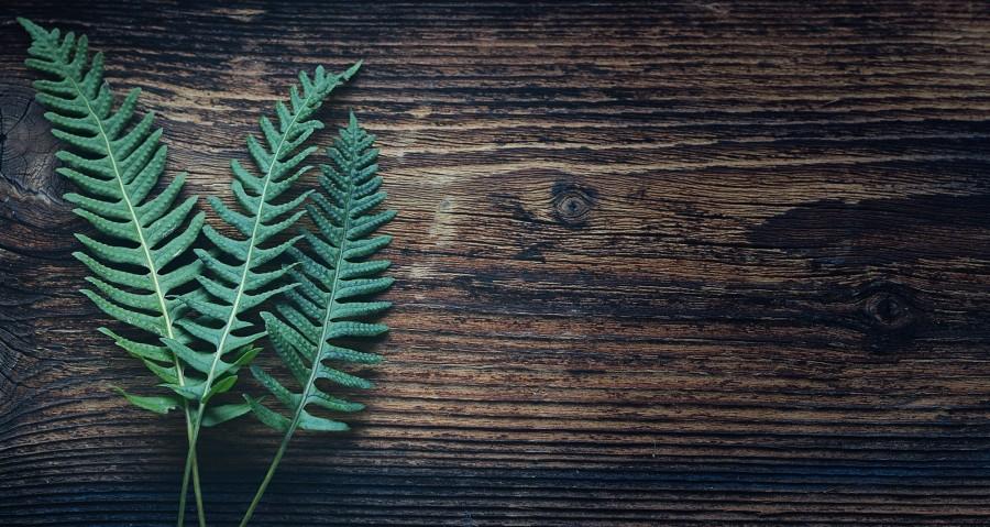 fondo, madera, background, hojas, helecho, nadie,