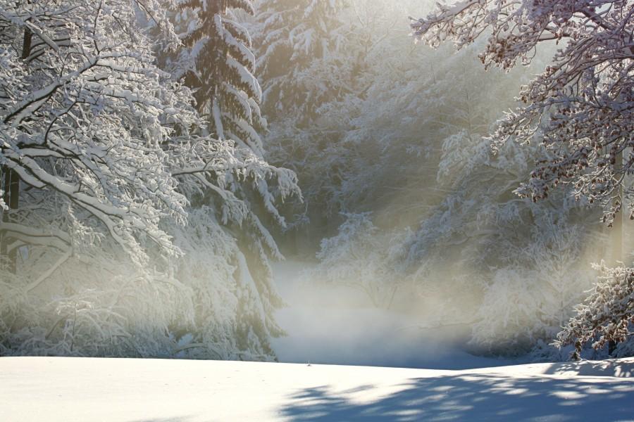 paisaje, nieve, nevado, bosque, amanecer, mañana, nadie, naturaleza,