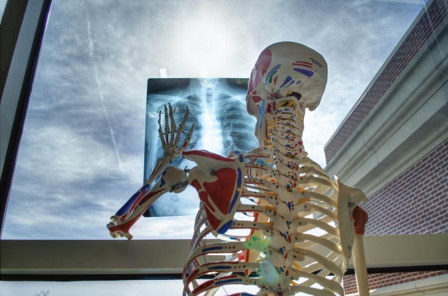 radiografia, esqueleto, concepto, medicina, salud,