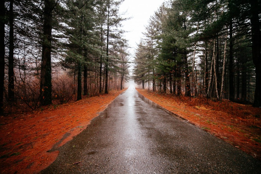 carretera, otoño, bosque, dia, naturaleza, paisaje, nadie, calle, camino,