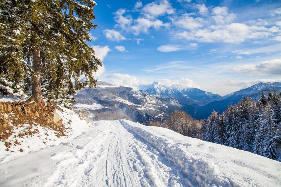 camino, ruta, carretera, calle, nieve, paisaje, invierno, dia, exterior, pino, frio, nevado,