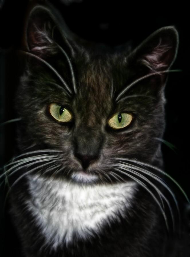 gatito, bebé de gato, animales jóvenes, agresivo, caza, gato, pieles, encantadora, animales, carnívoros, lindo, esponjoso, cabello, bebé, mamífero, pata, mascotas, juguetón, retrato, pura sangre, pequeños, curioso, querido , fotos gratis,  imágenes gratis, Gato doméstico, Cabeza de animal, Retrato, Gato melado, Monada, Gatito, Animal, Fotografía, Mirando a la cámara, Animal doméstico, Animal joven, Color, Día, Horizontal, Interior, Mascota, Nadie, Ojo de Animal, Parte del cuerpo animal, Temas de animales, Un animal, adorable, tierno, mascota, peludo, melena, colores, pelos, rayas, felino, minino, micifuz, michino, madrileño, felido, gatuno, fondo negro, fondo de pantalla HD, fondo de pantalla 4k, resolución, salvapantalla