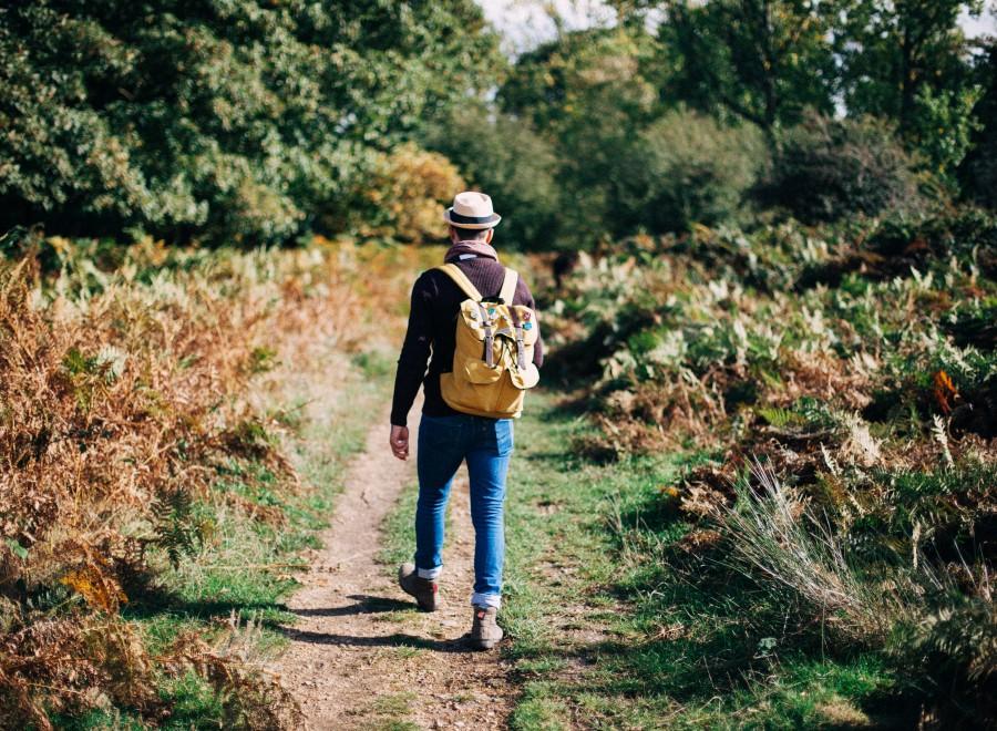 hiker, hiking, hombre, aventura, mochila, campo, aire libre, estilo de vida, masculino, camino, verano, turismo, viaje, vacaciones, trekking,