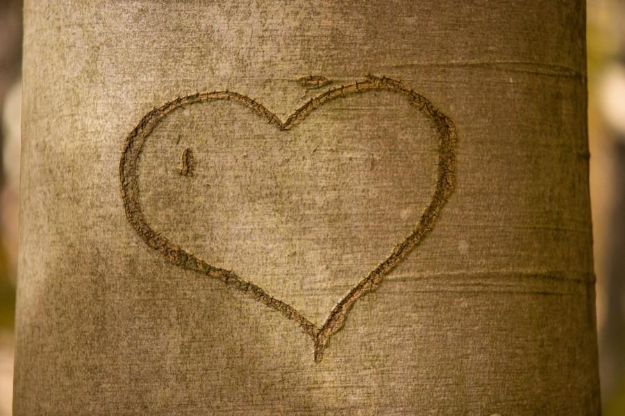 corazón, corteza de árbol, romance, romántico, árbol, tallado, amor, grabado, lealtad, símbolo, relación, emoción, el amor, corazón del árbol, corteza, día de san valentín , fotos gratis,  imágenes gratis