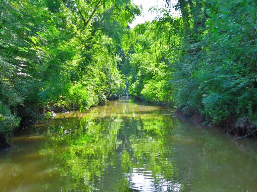 rio, paisaje, nadie, delta, tigre, argentina, jungla, bosque, naturaleza, aire libre,
