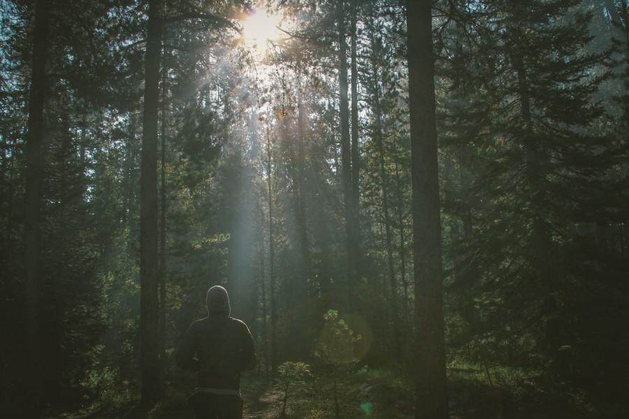 una persona, gente, hombre, concepto, libertad, bosque, adulto, naturaleza, libertad, aire libre,