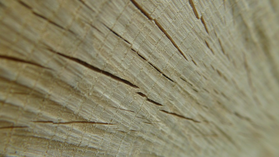 madera, textura, fondo, background, arbol, cortado,