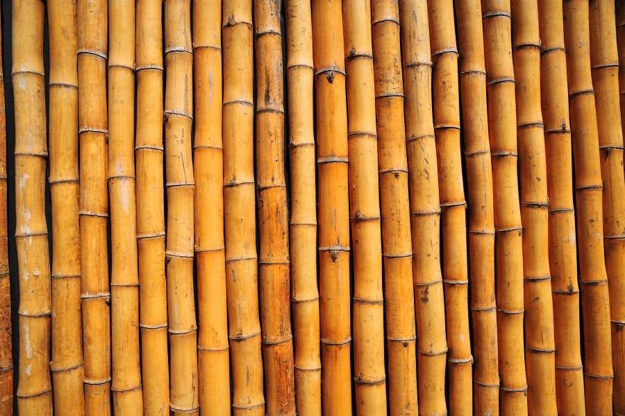 Fondo, Fondos, Textura, Texturas, Caña, Bambu, Amarillo