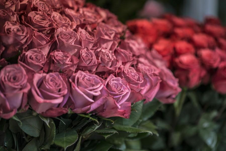 rosas, flores, ramo de rosas, rojo, primavera, colorido, fragancia, perfume, floreria,
