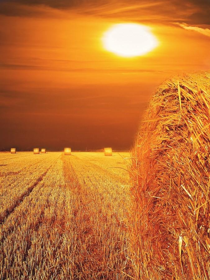 campo, atardecer, fardo, pasto, seco, paisaje, nadie, paja, dorado,